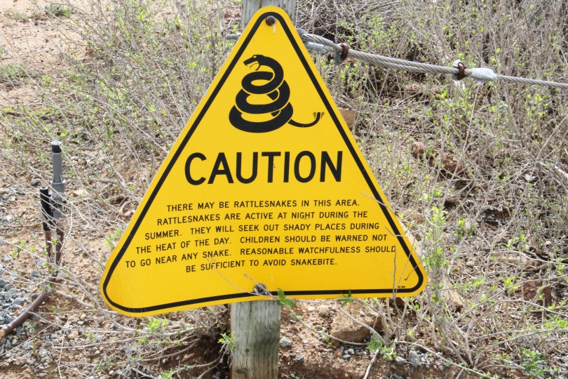 Be alert for rattlesnakes while exploring the bay