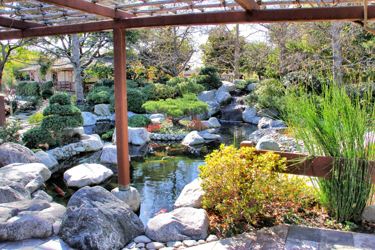 The koi pond again.  Koi represent longevity and virility in Japan.  A small island in the pond is shaped like a turtle, symbolizing the longevity of the garden and a wish for the people of San Diego