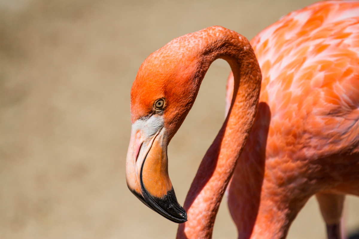 The eye of a flamingo.