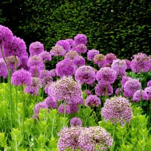 English garden near Bath