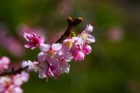 Pink & Green: San Diego spring