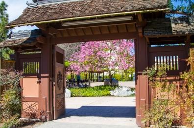 Tea Garden in Balboa Park