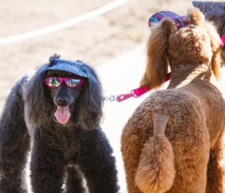 Fashion dog in Balboa Park