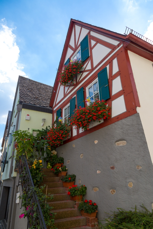 rudensheim-9-of-24