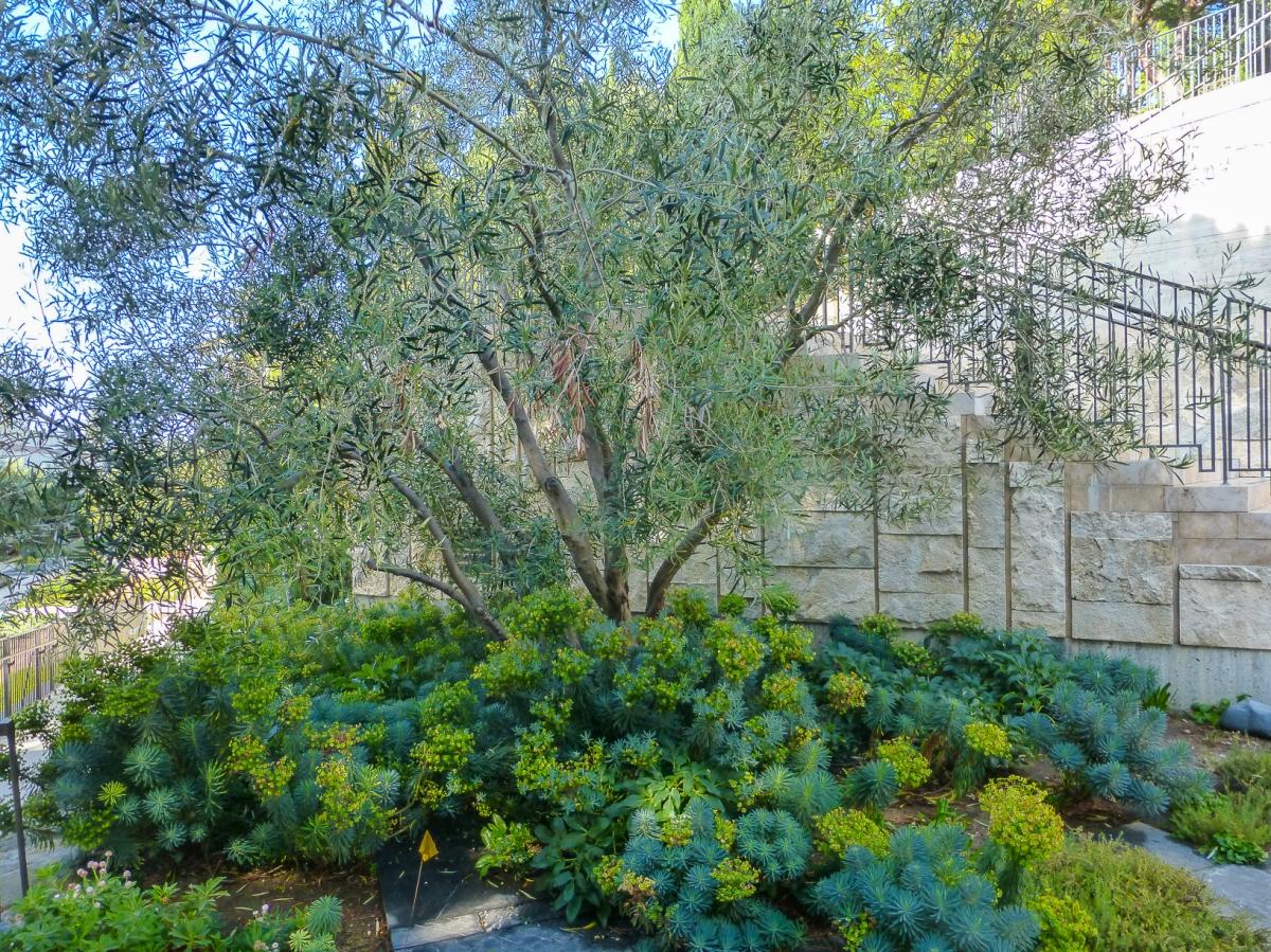 Garden Plants-1