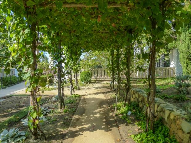 Garden Plants-14