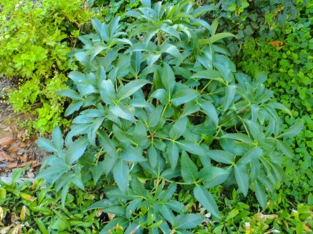 Garden Plants-28