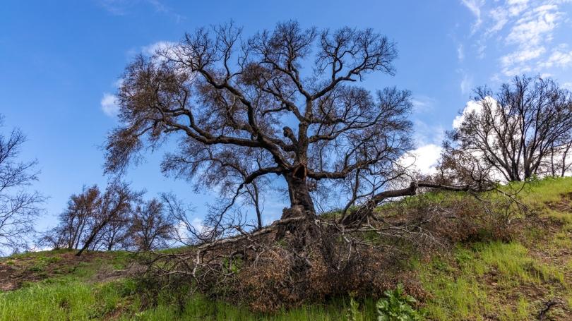 Malibu Canyon Blog-2