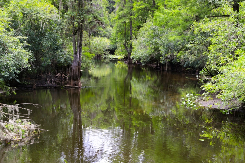 swamp-7