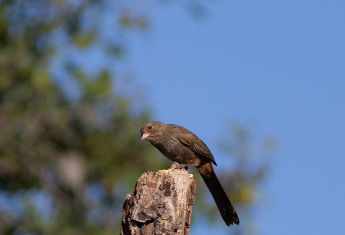 birds1-14