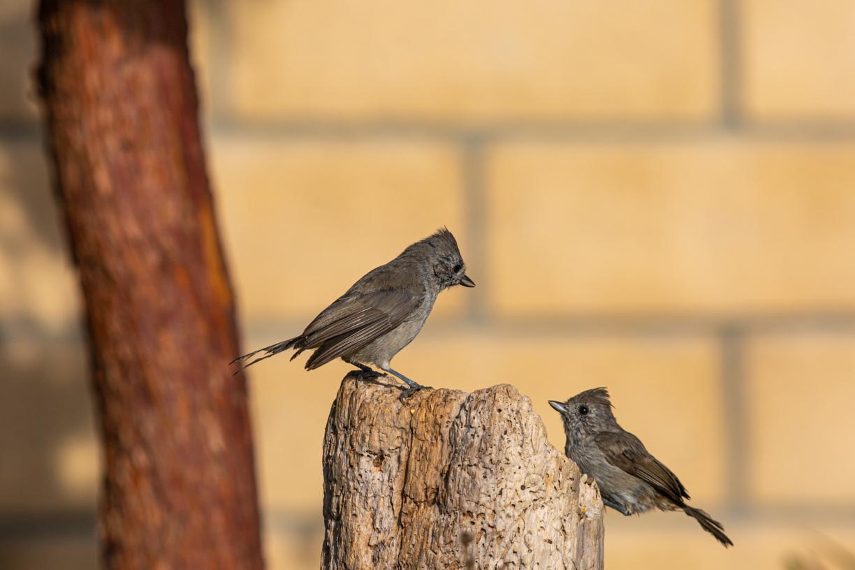 birds1-26