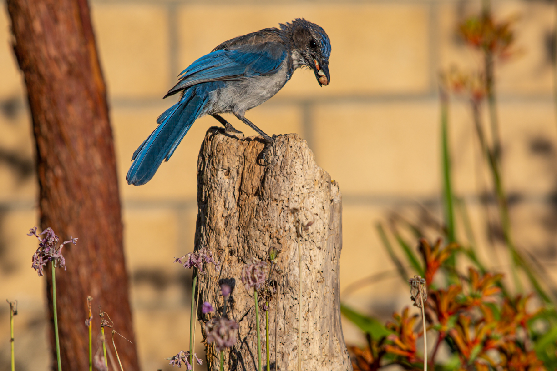birds1-4